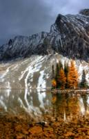 Larch Lights