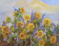 Carmel Valley Sunflowers