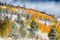 Colorado Rocky Mountain Snowy Autumn Colors