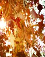 autumn branch dreamy light