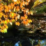 """autumn pond"" by lizmix"