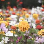 """wildflower-001-4"" by rYgardner"