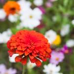 """wildflower-001-3"" by rYgardner"