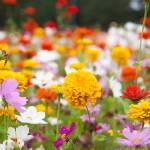 """wildflower-001-5"" by rYgardner"