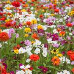 """wildflower-001-6"" by rYgardner"