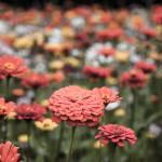 """wildflower-001"" by rYgardner"