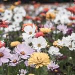 """wildflower-001-9"" by rYgardner"