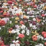 """wildflower-001-7"" by rYgardner"