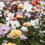 """wildflower-001-11"" by rYgardner"