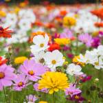 """wildflower-001-8"" by rYgardner"