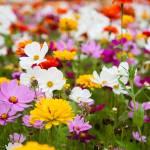 """wildflower-001-10"" by rYgardner"