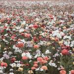 """wildflower-001-13"" by rYgardner"