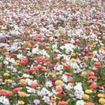"""wildflower-001-15"" by rYgardner"