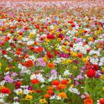 """wildflower-001-12"" by rYgardner"