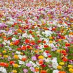 """wildflower-001-14"" by rYgardner"