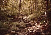 Wooded Glen