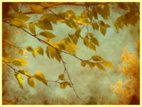Golden Leaves-2