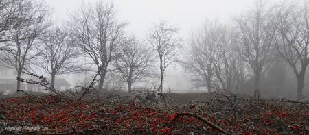 Foggy Berries_MG_0208
