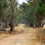 """""""Winding dirt road, country Australia #1"""" by Linde"""
