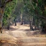 """""""Winding dirt road, country Australia, #2"""" by Linde"""