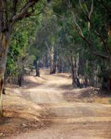 Winding dirt road, country Australia, #2