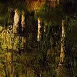 """East Millbury Reflections"" by bavosiphotoart"