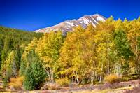 Rocky Mountain Autumn Bonanza