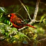 """""""Cardinal Rules"""" by ChrisCrowley"""