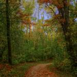 """""""Autumn Walk in the Woods"""" by WaynePhotoGuy"""