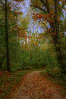 Autumn Walk in the Woods