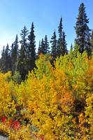 Fall in the Yukon - 105