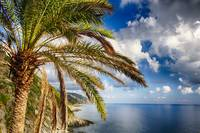 Palm Tree on the Coastal Hill, Cinque Terre