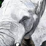 """Elephant II"" by VisionaryPictures"