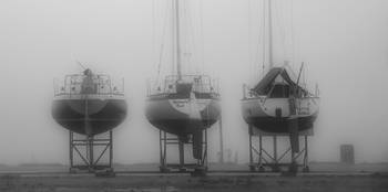3 in the fog