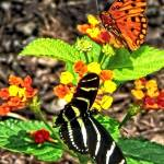 """Monarch Butterfly and Zebra Butterfly"" by susansartgallery"