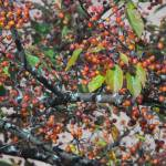 """Berries - Alberta Crab Apple"" by MorelandPhotography"