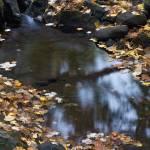 """""""autumn"""" by JulieScholz"""