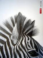 zebra_close_up_