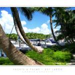 """Yachts & Palms - Key Largo, FL"" by CCordelia"