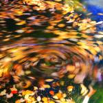"""Turning Leaves"" by RoupenBaker"