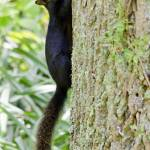 """Black Squirrel"" by WildAboutNaturePhotography"