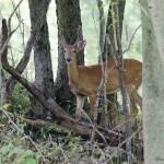 """Buck"" by WildAboutNaturePhotography"