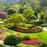 """Butchart Gardens C9"" by Johnson-Miles"