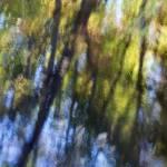 """""""autumn impressions 2"""" by JulieScholz"""