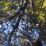 """""""autumn impressions 1"""" by JulieScholz"""