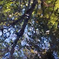 autumn impressions 1 by julie scholz
