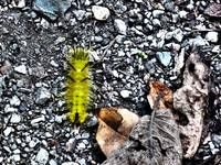 Caterpillar and Leaves