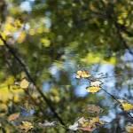 """""""autumn impressions 5"""" by JulieScholz"""