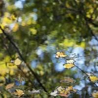 autumn impressions 5 by julie scholz