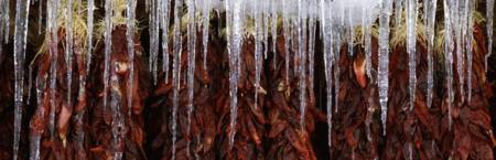 Close up of red chili ristras with icicles Taos Ta